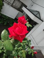 090509_5.jpg
